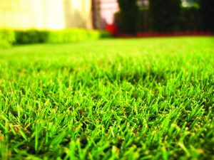 Grass on a hot day
